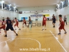 PCN Pesaro - Pallacanestro Senigallia
