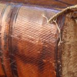 FuoriCampo: Il Basket in libreria